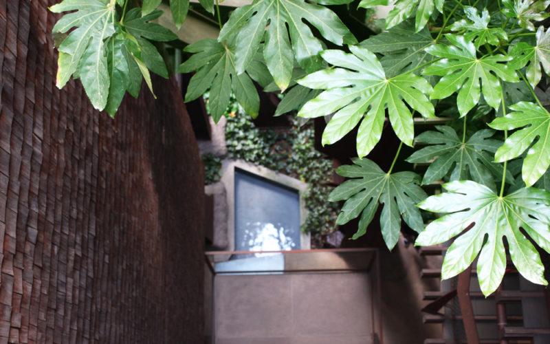 Casa 25VERDE…un bosco in città